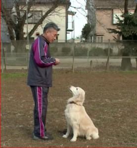 藤井聡犬のしつけ